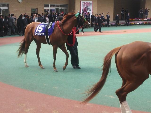 ベローチェ ローレル ローレルベローチェの新馬データ